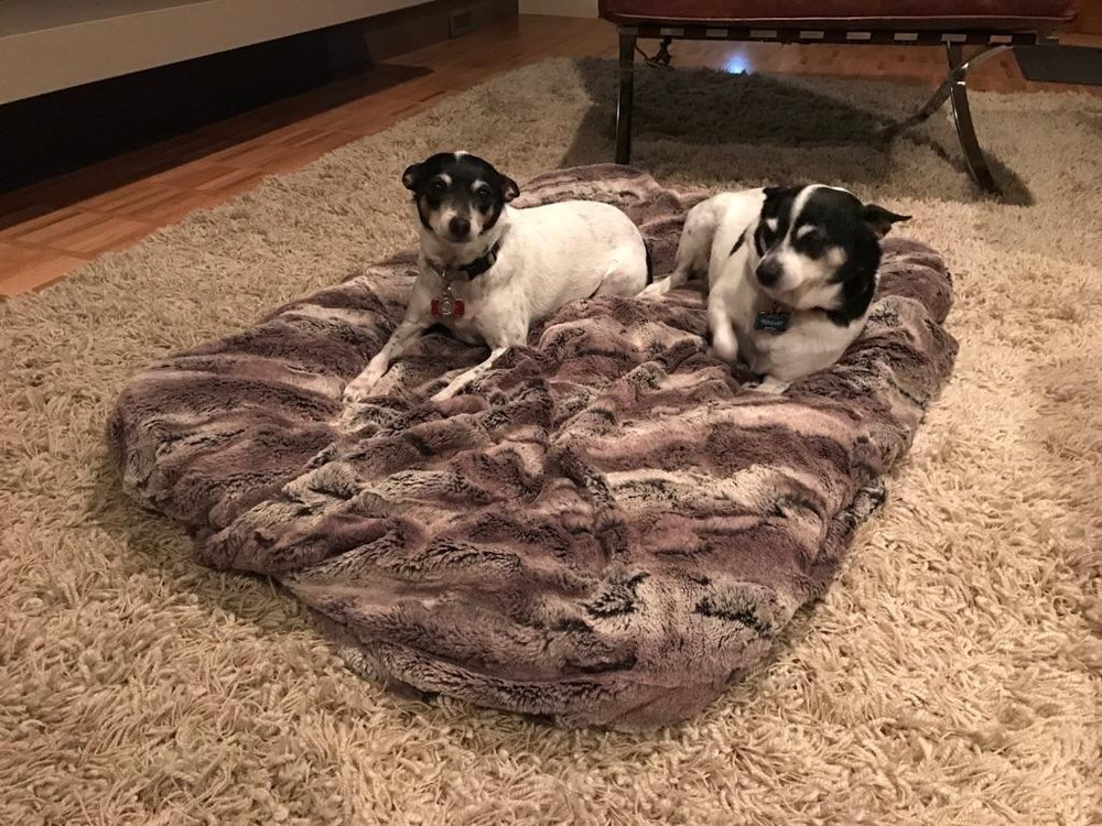 """Tasia & Emily are so happy on their MOUNTAIN FOX Luxury bed. They may never move again. This is a 60"""" cover & it fits a Large rectangle Dog Bed."""