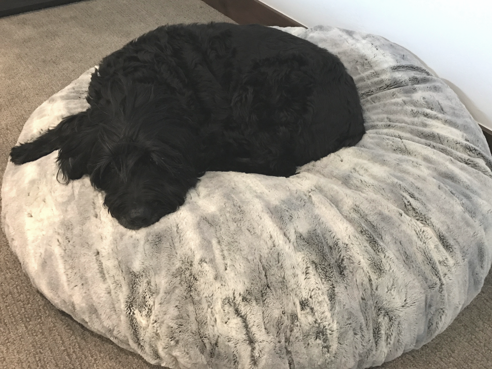 "Reagan's Dog Cowboy just can't keep his Eyes open because SILVER FOX is just so Dreamy.  The 60"" cover fits a Costco Dog Bed."