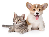 Diffusers & Your Pets