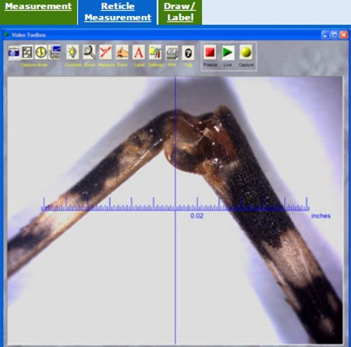 Reticle measurement done on a insect leg