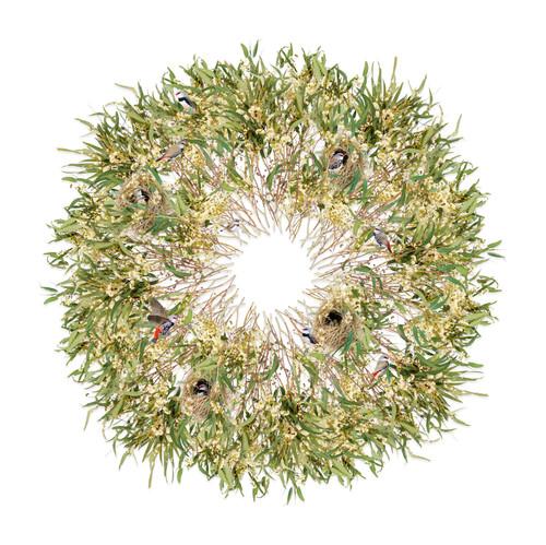 Diamond Firetail Finches Nesting in Ribbon Gum by Jason McDonald - MCJ.001 - MCJ.004