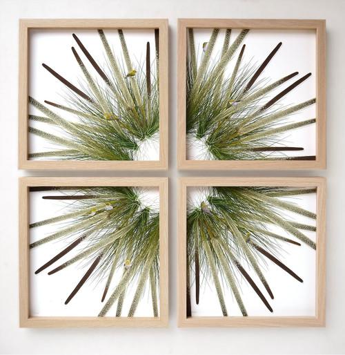 Grass Tree and Silvereyes Set of 4 by Jason McDonald - MCJ.013 - MCJ.016