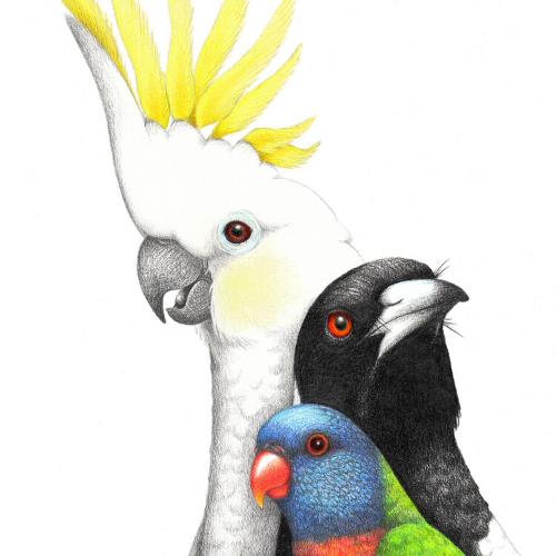 Birds of My Backyard