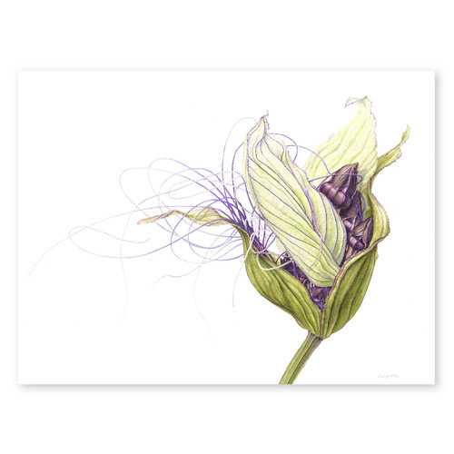 Batflower Greeting Card
