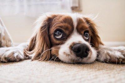 ruff-buddy-dog-leashes-shipping-cc0-pb1.jpg