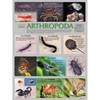 Arthropoda, Chart