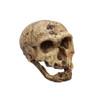 Homo neanderthalensis, 'La Chapelle aux Saints'