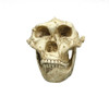 BH003-C - Australopithecus robustus, SK-48, with jaw