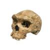 Homo heidelbergensis, 'Rhodesian Man'