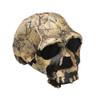 BH011 - Homo ergaster, KNM-ER 3733