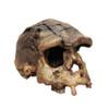 Homo erectus, Sangiran 17