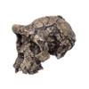 BH029 - Sahelanthropus tchadensis