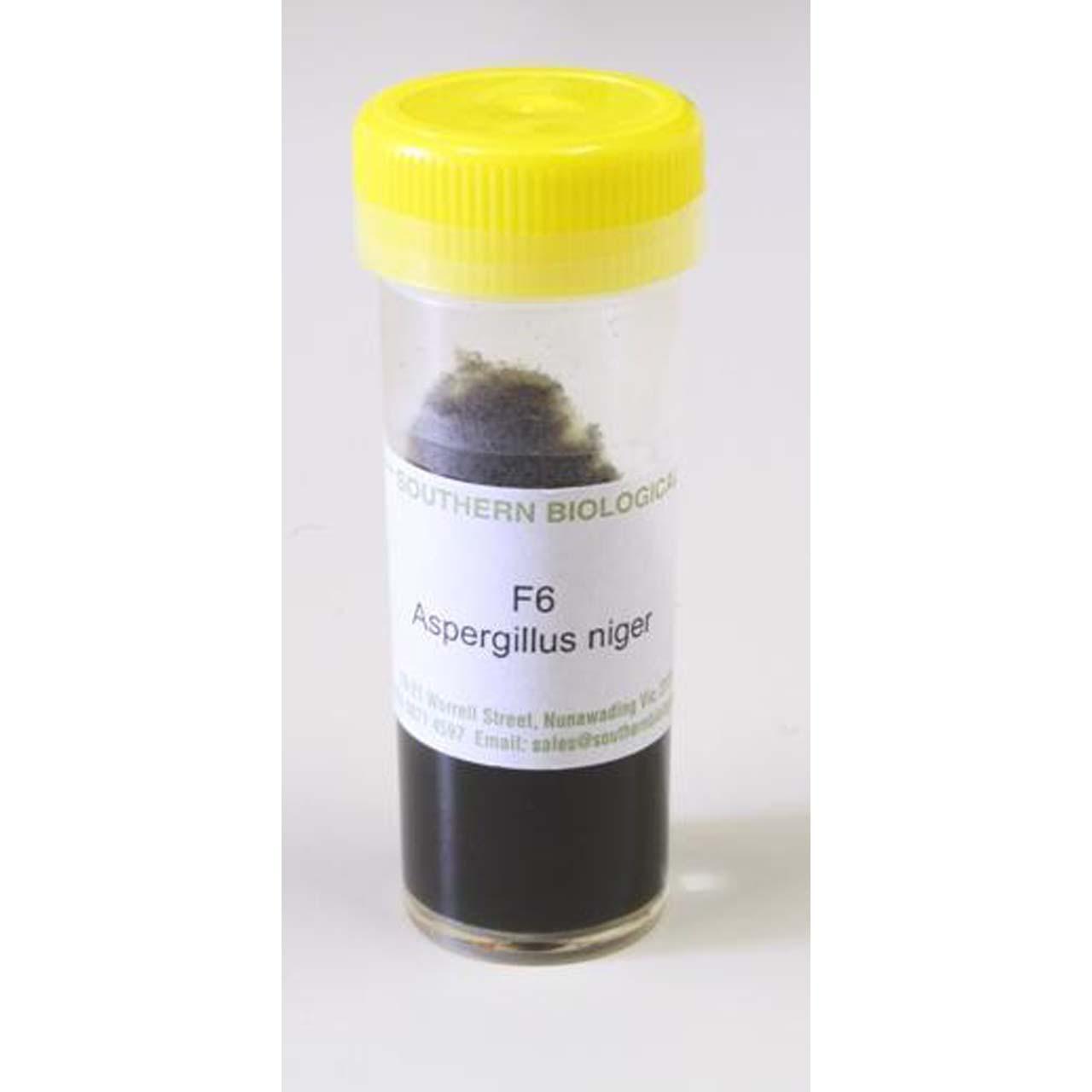 Aspergillus niger, live slope