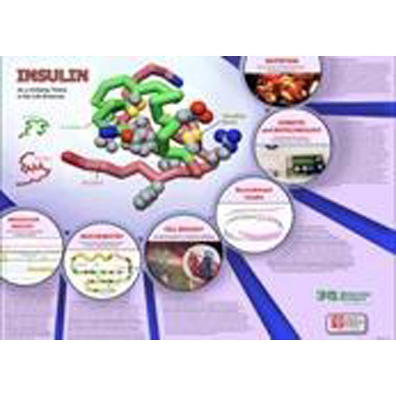 M1.35 - Insulin mRNA to Protein Kit. 3 group set.