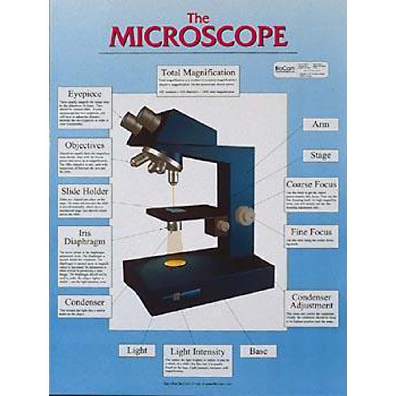 The microscope, Chart