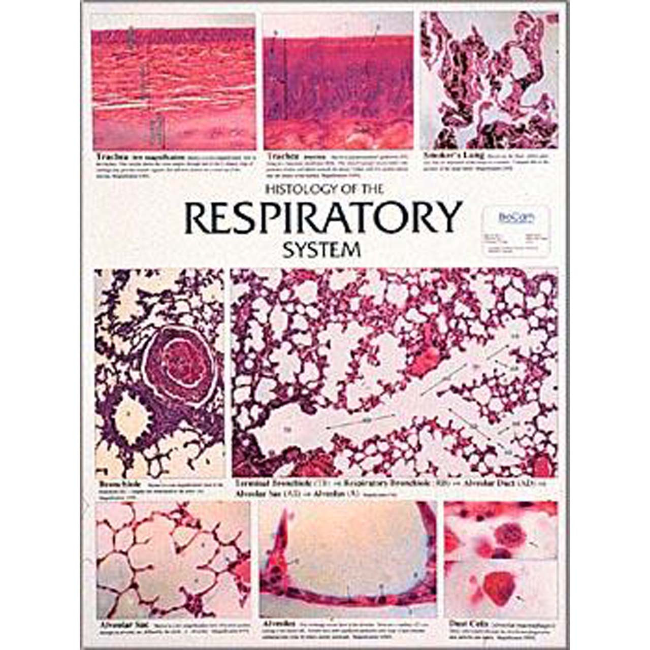 WC20 - Respiratory system, Chart