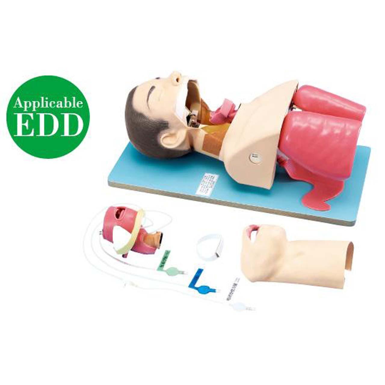 KOKEN Endotracheal Intubation Training Model Edema Version