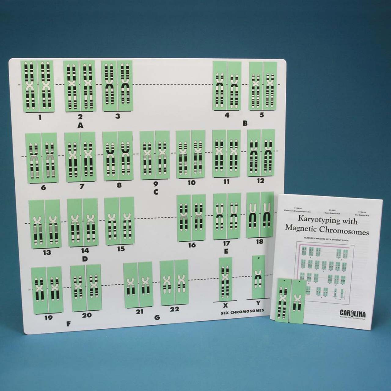LAK2.25 - Karyotyping with Magnetic Chromosomes, 1-Station Kit