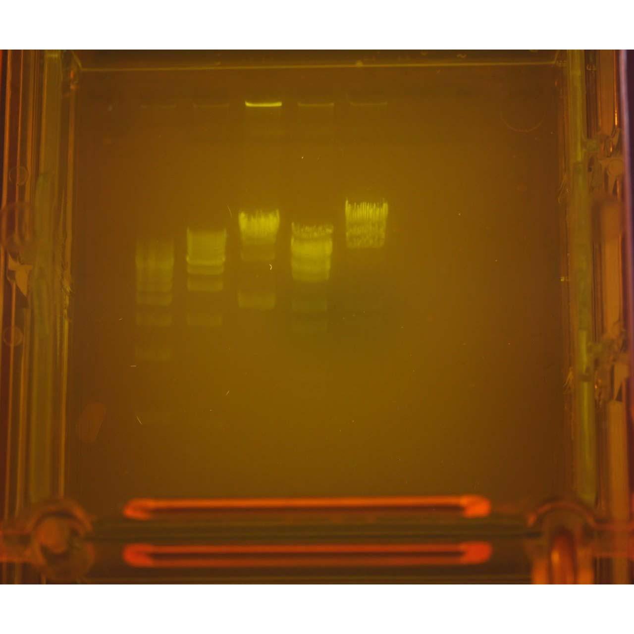 G40.04 - blueGel Electrophoresis with built-in illuminator