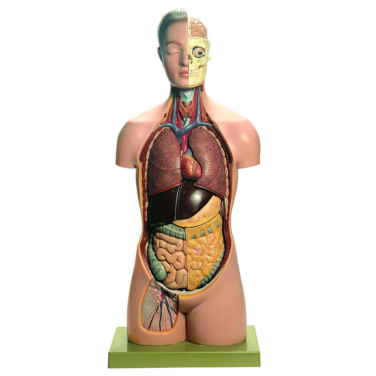 AS16 - Torso of Young Man with Head