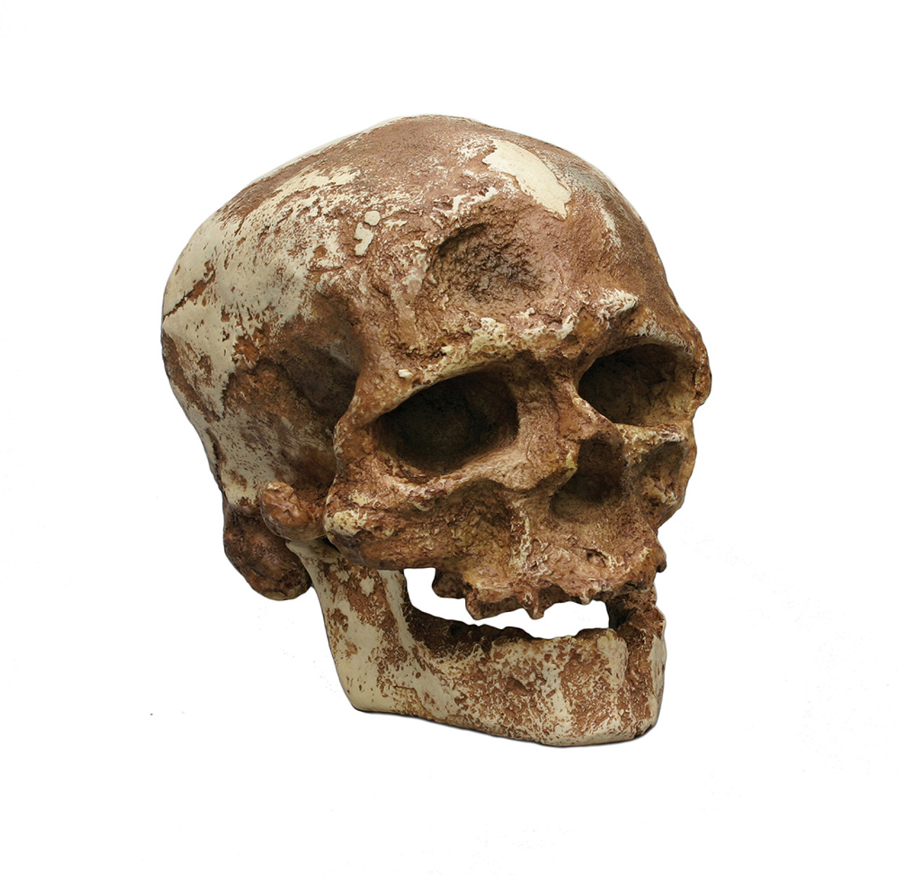 BH017-C - Cro-Magnon 1, with jaw