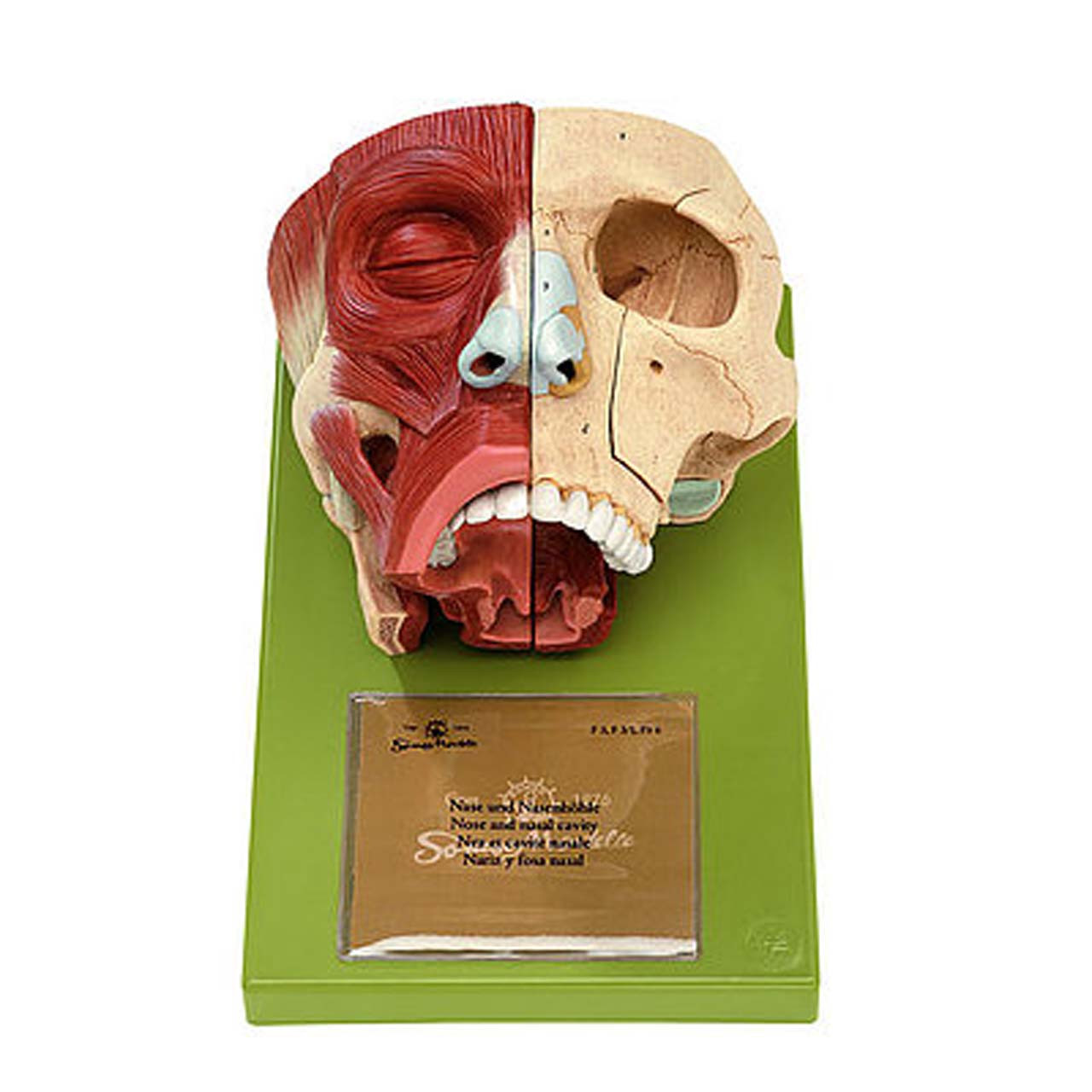 FS3 - Nose and Nasal Cavities