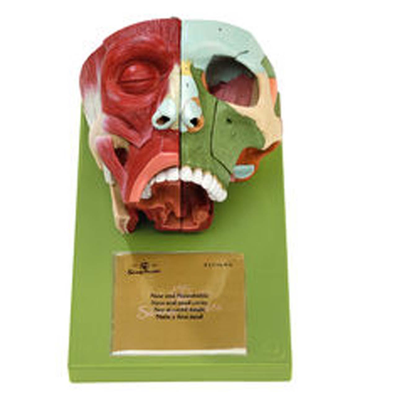FS3/1 - Nose and Nasal Cavities