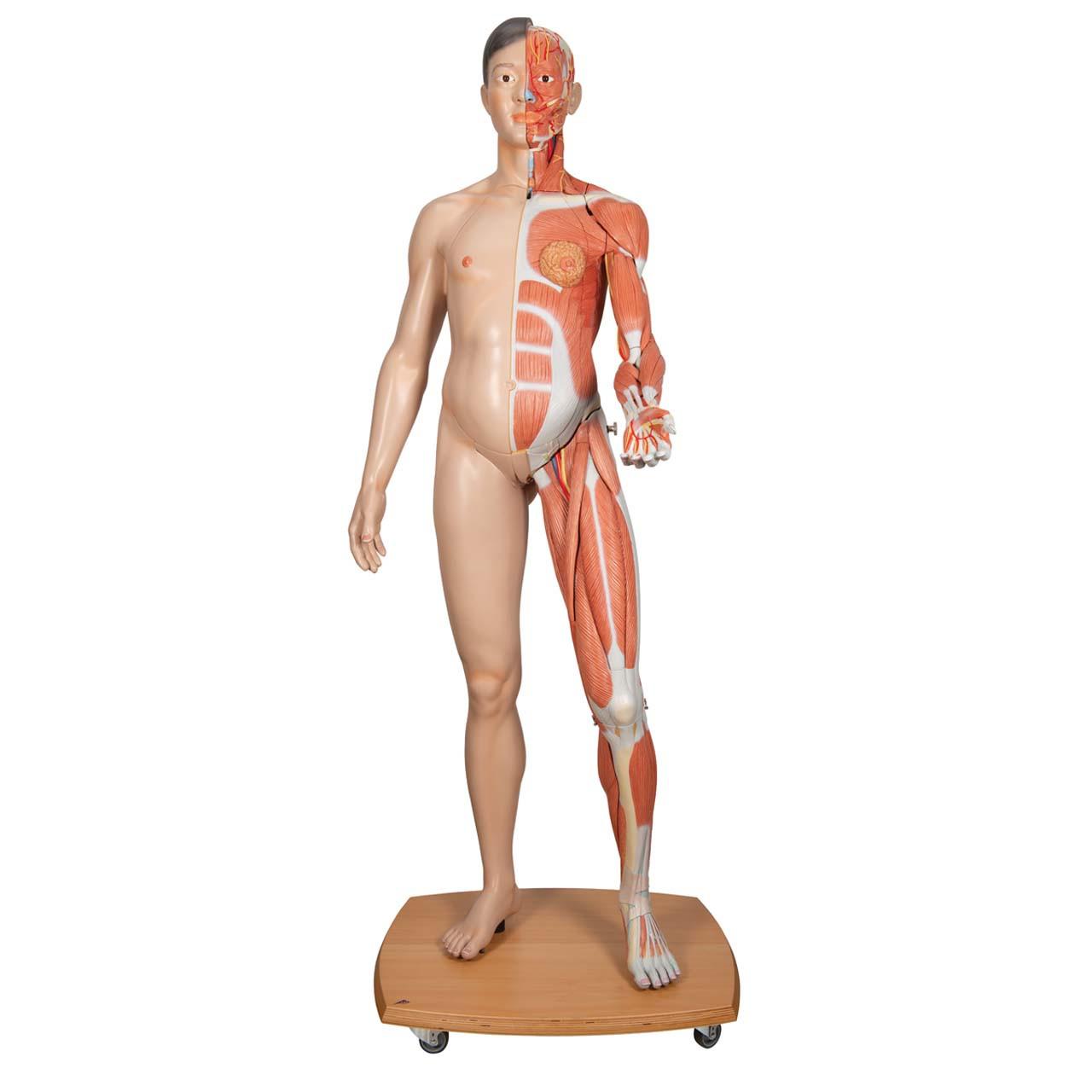 Life-Size Dual Sex Asian Human Figure, 39-part