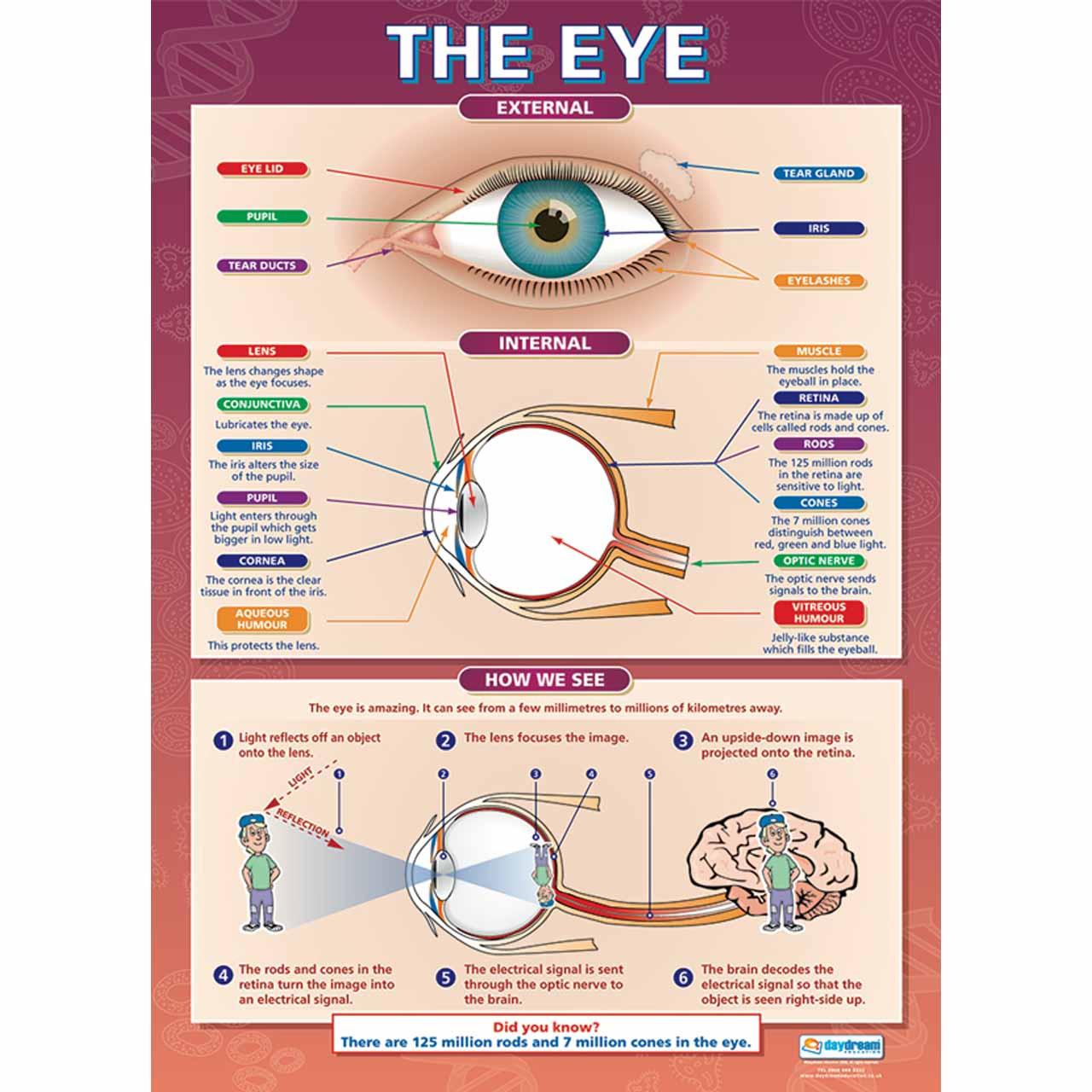 SC001L - The Eye Laminated