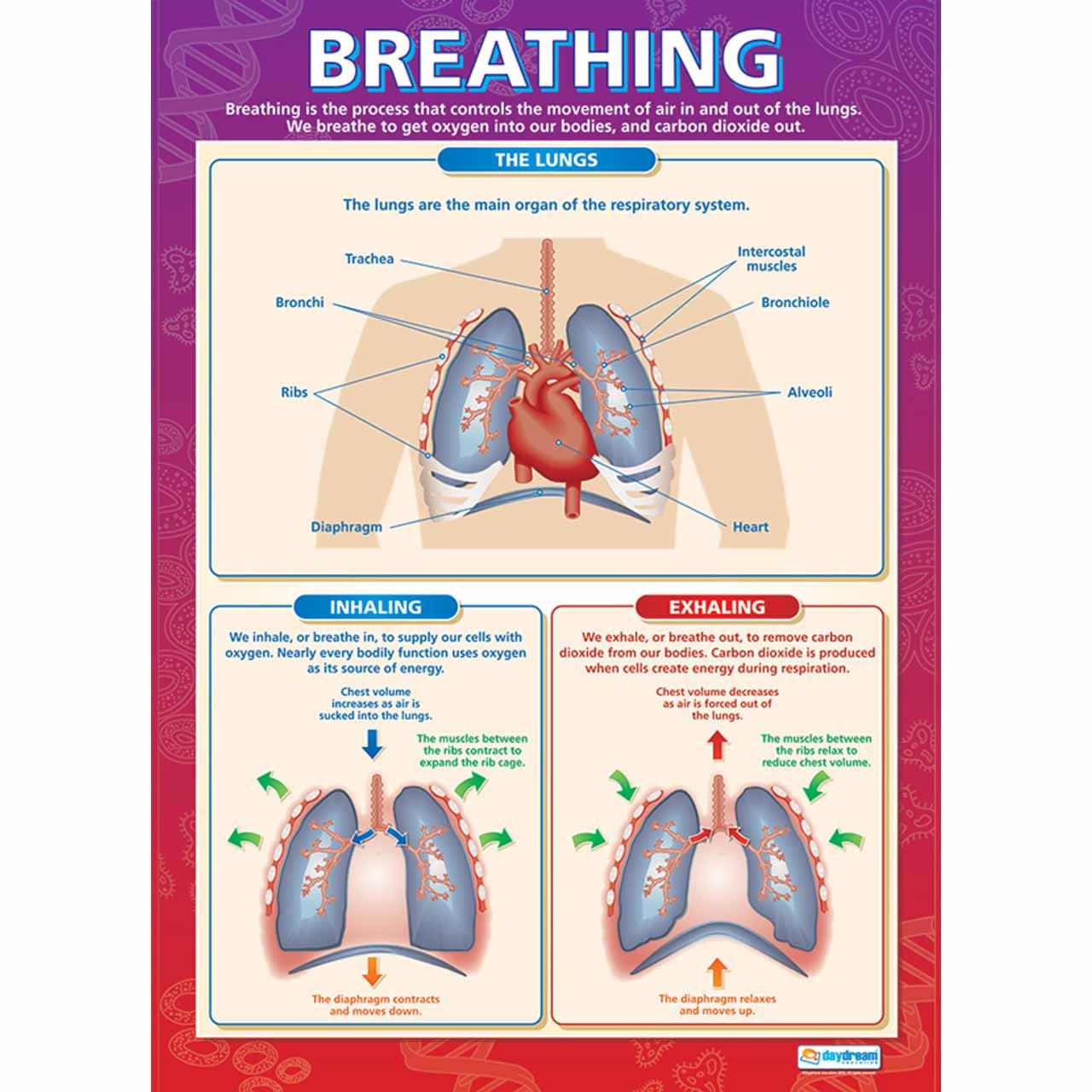 SC004L - Breathing Laminated
