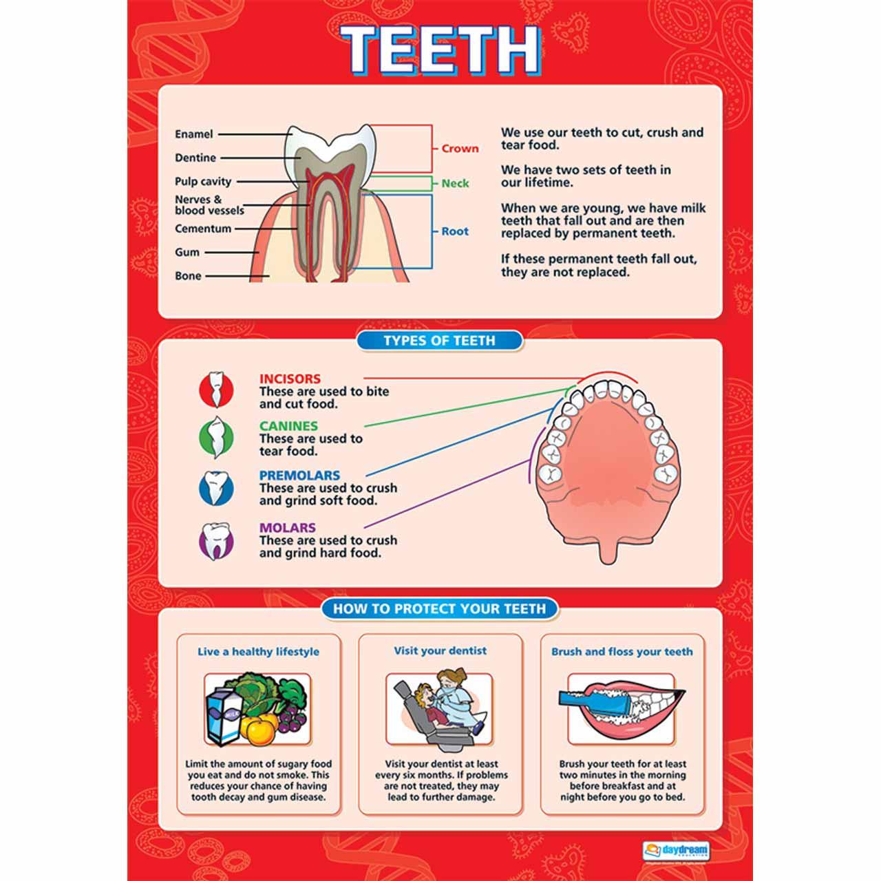 Teeth Laminated