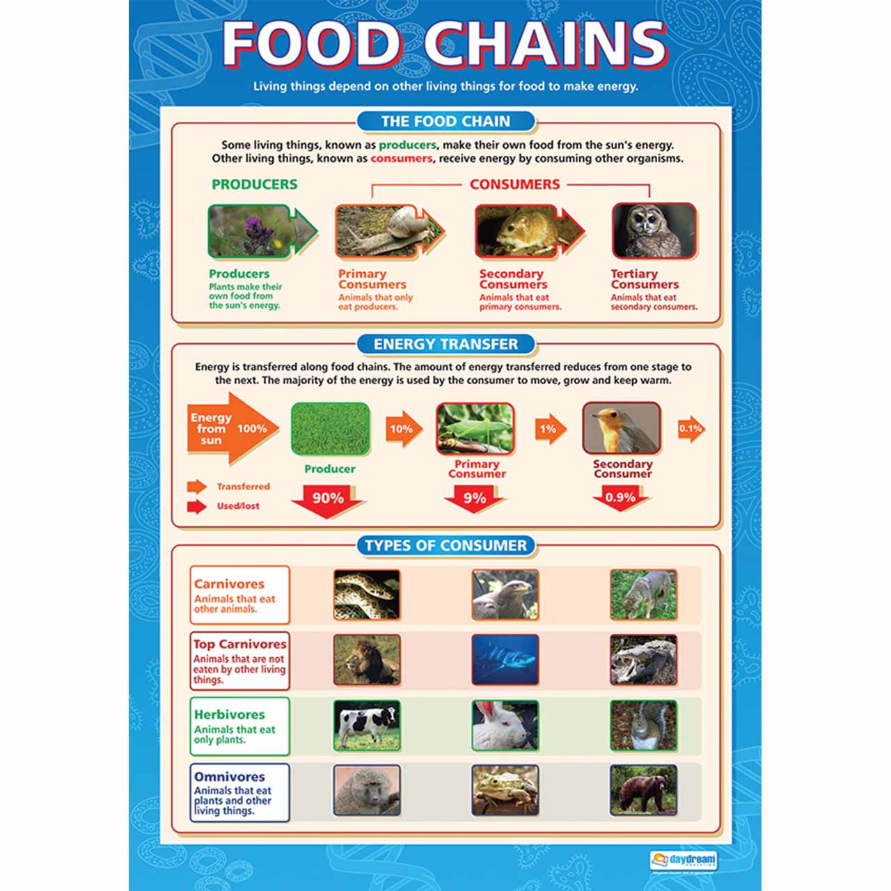 Food Chains Laminated