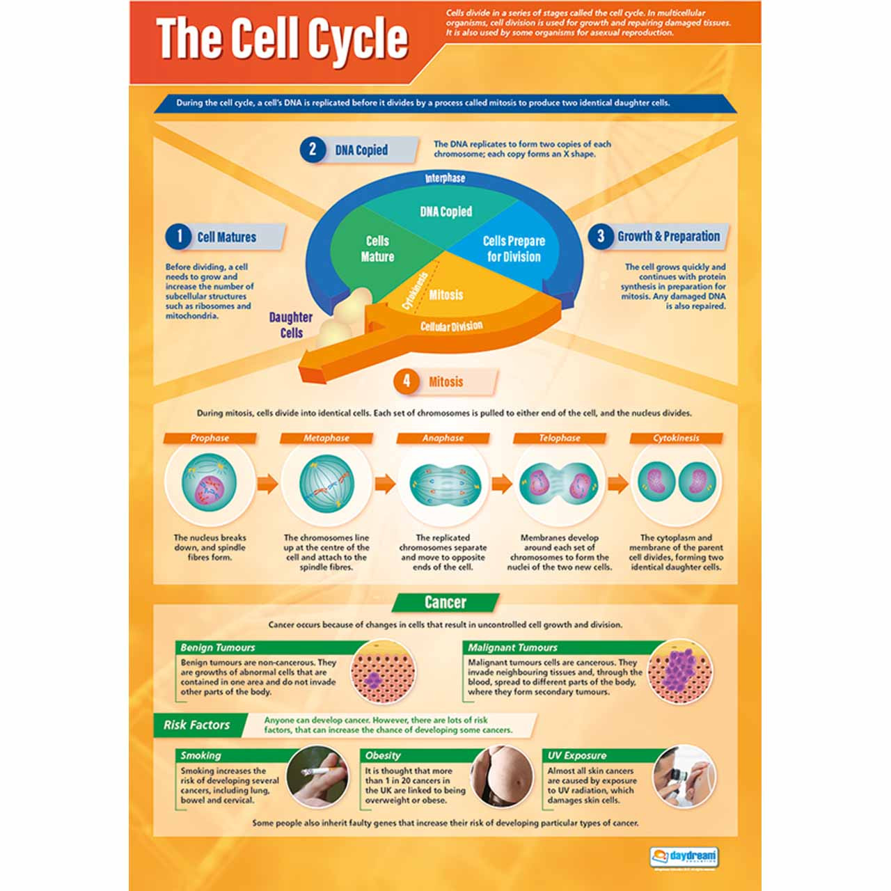 SC061L - The Cell Cycle