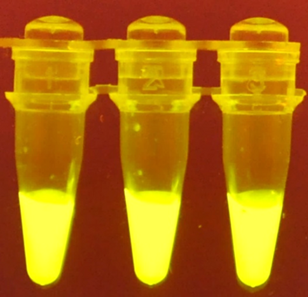P51 Enzyme Lab: β-Gal Glow™