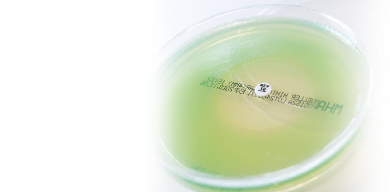 Antibiotic susceptibility discs, chloramphenicol, 30ug