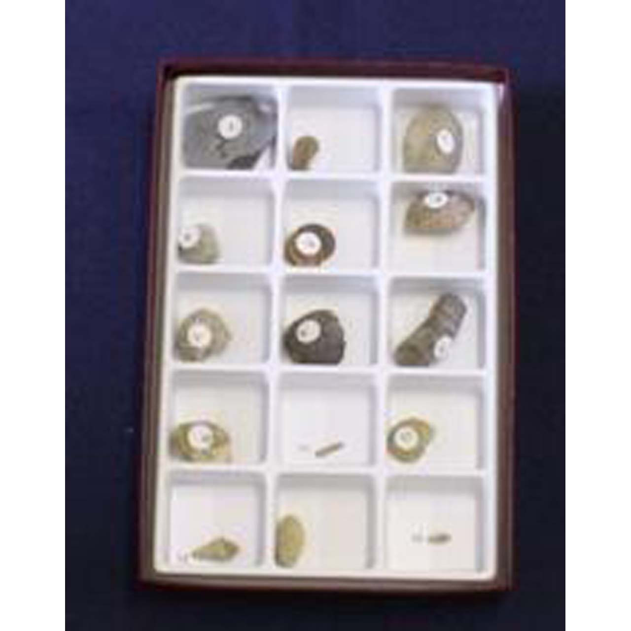 Paleozoic fossil collection