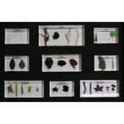 Plant kingdom collection: 25 specimens, embedded