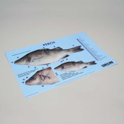 Perch dissection mat 28cm x 43cm