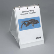 Frog dissection flip chart