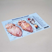 Mammalian heart dissection mat 28cm x 43cm