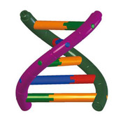 DNA1.01 - DNA double helix student model