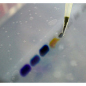 G42.90 - Dyes for electrophoresis