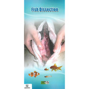 BPM10.90RB - Dissected fish with key, embedded