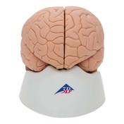 1000222 - Brain Model, 2 part