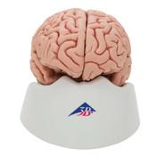 1000226 - Classic Brain, 5 part