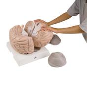 1001261 - Giant Brain, 2.5 times full-size, 14 part