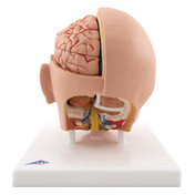 Head Model, 6 part