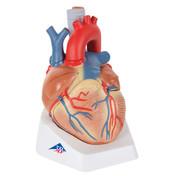 1008548 - Heart, 7 part