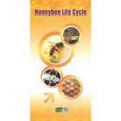 Honey bee life cycle, embedded