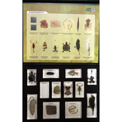 Animal kingdom collection 1, 12 specimens, embedded